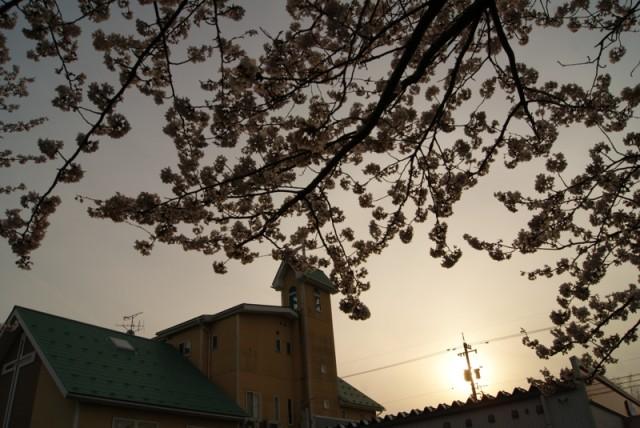 御経塚 馬場川緑道の桜と協会