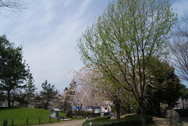 御経塚 泉の広場の桜と木蓮