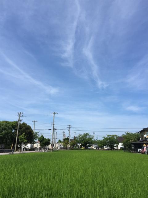 石川県野々市市御経塚 青空と青々とした水田