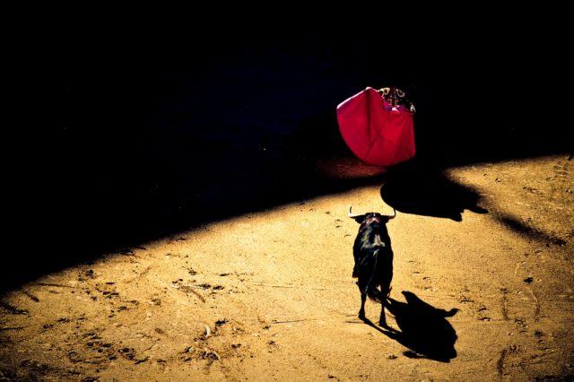 Photo by Giovanni Calia on Unsplash