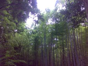 京都府八幡市の竹林 2008年6月