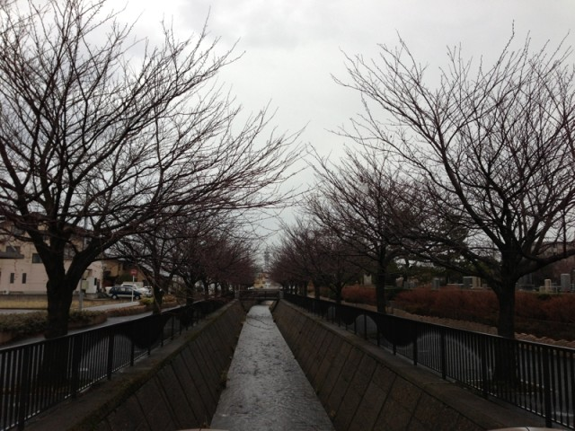 冬の馬場川緑道