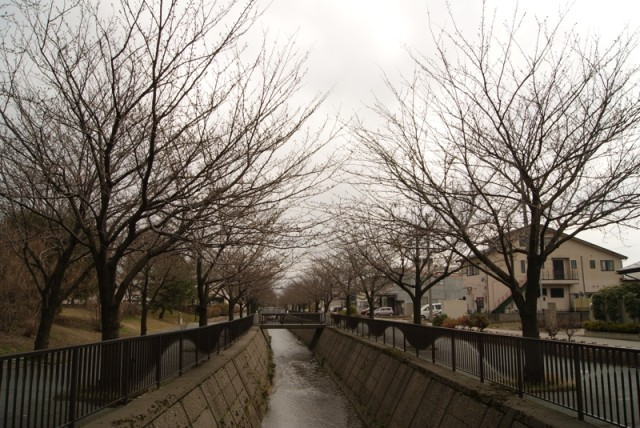 御経塚馬場川緑道の桜並木