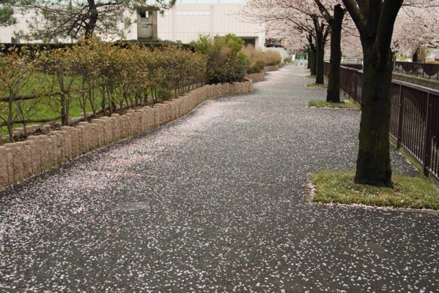 花びらが敷き詰められた御経塚 馬場川緑道