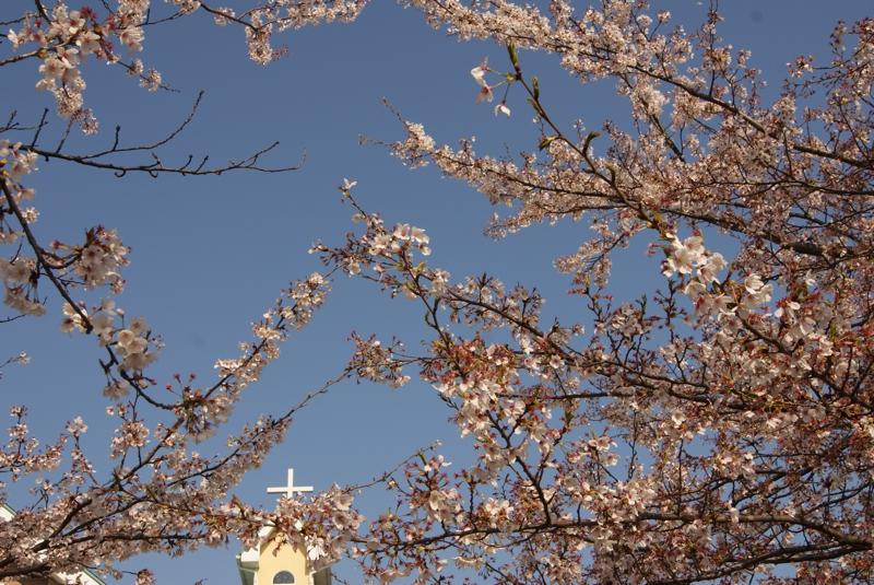御経塚 馬場川緑道の桜並