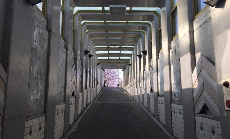 馬場川緑道地下道からの桜
