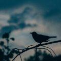『ツイッター 140文字が世界を変える』コグレマサト+いしたにまさき
